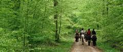 Forêt de Rambouilet