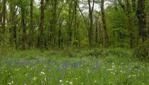 Permalien à:Balade à la journée en Forêt de Rambouillet